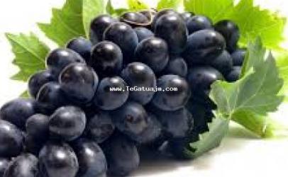 Vetitë mbrojtëse të farave të rrushit