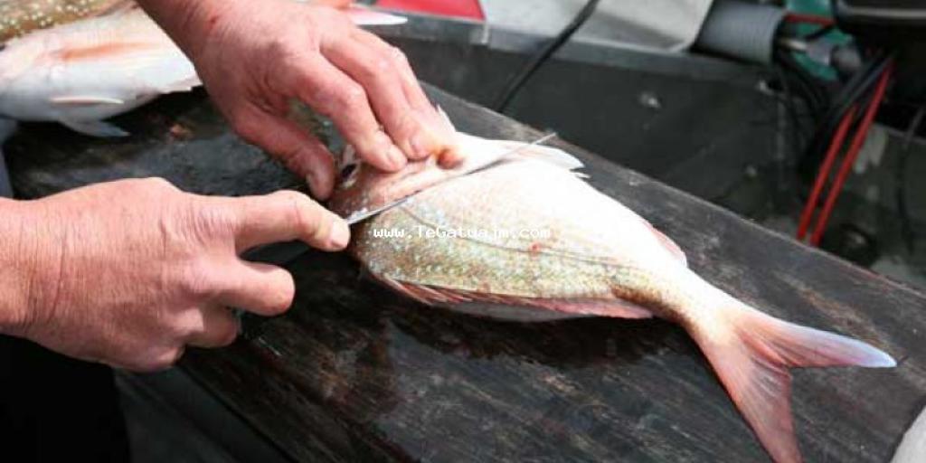 Pastrimi i peshkut disa këshilla të vlefshme