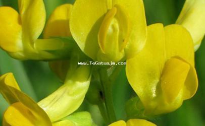 Lulet që janë të përjetshme
