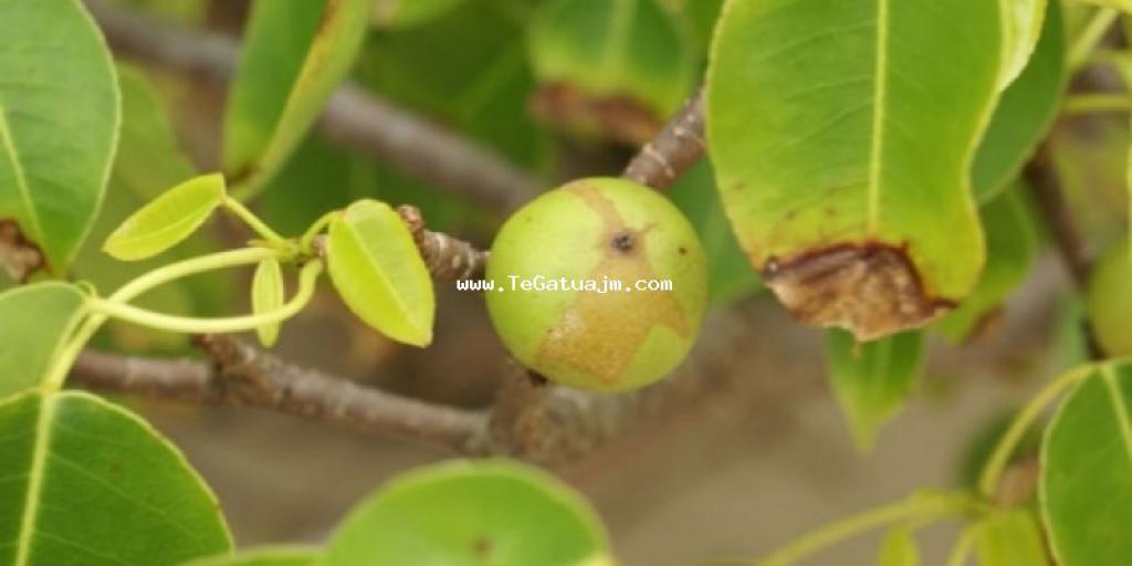 Cilat jan mollat që shkaktojn vdekjen