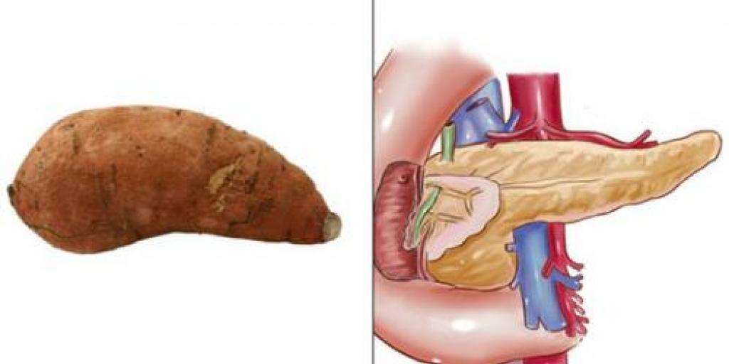 Çdo gjë në natyrë është i ngjajshem  me organet e trupit  ton!