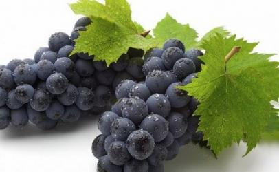 Rrushi i dobishem per shendet