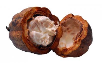 Përdorime të rëndesishme të gjalpit të kakaos